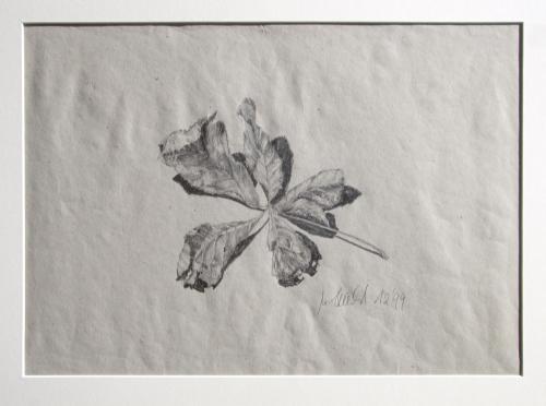 Kastanienblatt, Bleistift auf Papier